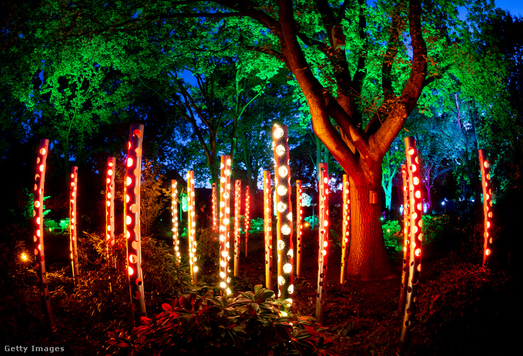 Lapozgatónk témája a százországi  Bad Zwischenahn községben található erdő, amit ilyen különleges világítással ékesítettek fel.