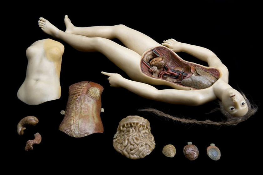 Anatomical Venus. Wax figure of reclining woman, Florence. Wellc