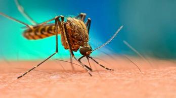 750 millió génmódosított szúnyogot engednek szabadjára Floridában