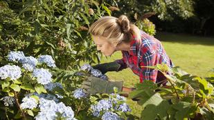 5 hiba, amit a hortenziák ellen elkövethetsz