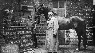 A ló, aki tudott számolni – Így verte át egy állat a tudósokat