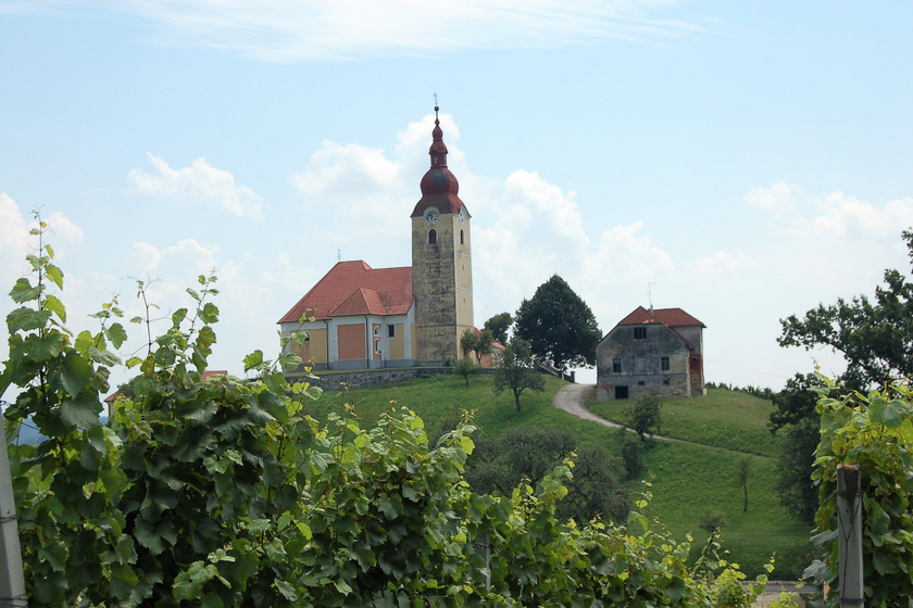 Gyönyörű tájak Bizeljsko régióban