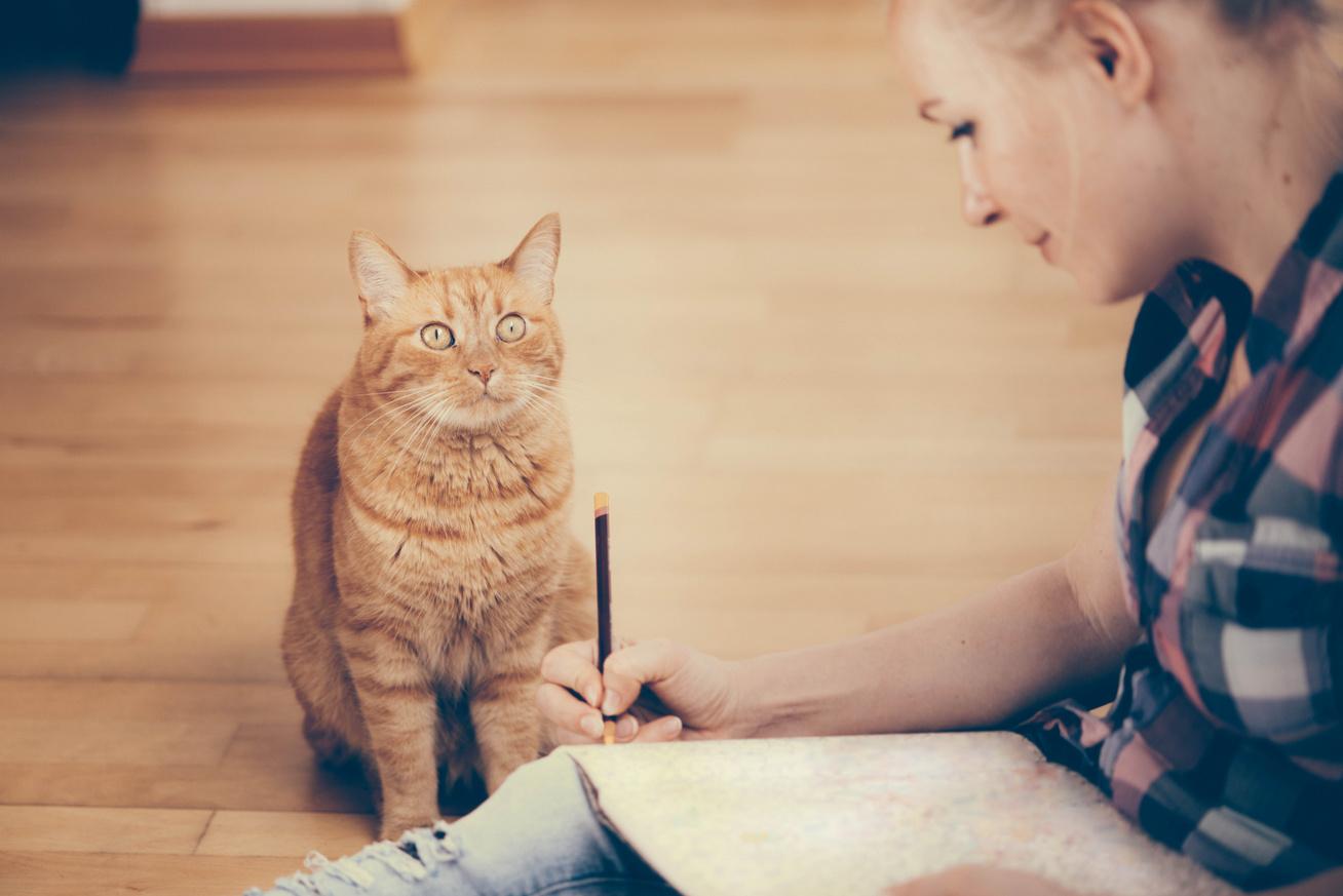 macska-rajz-borító