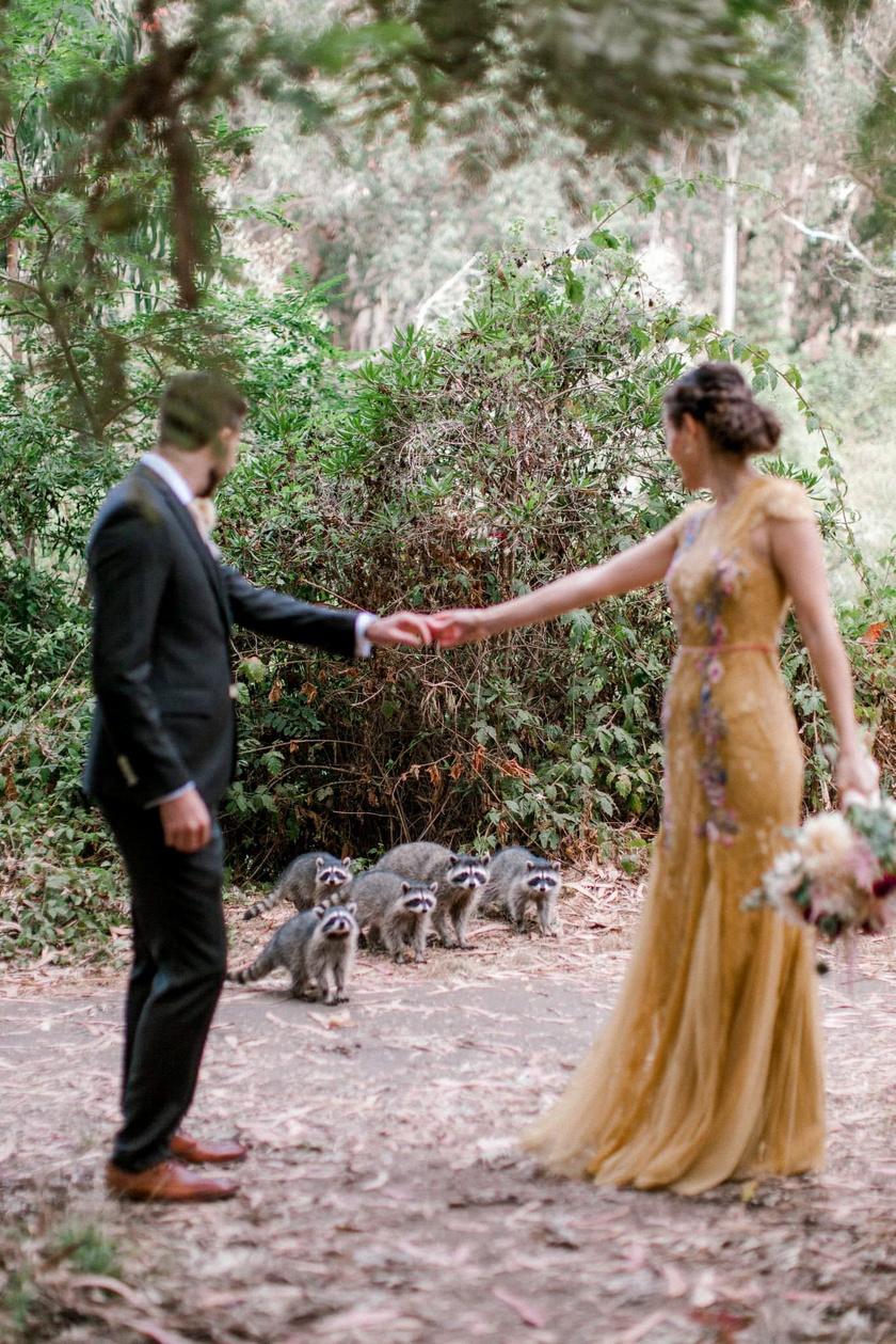 Megérkezett a vendégsereg a fotózásra. A mosómedvecsapat kíváncsian nézte, mégis mit csinál a pár az ő területükön.