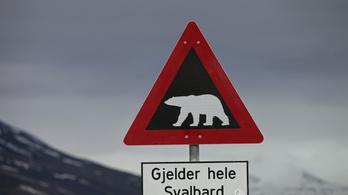 Jegesmedve marcangolt szét egy kempingezőt