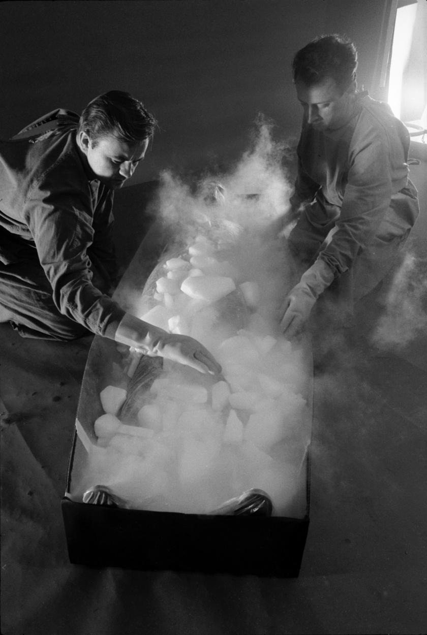 Bob Nelson és dr. Dante Brunol bemutatója a fagyasztás menetéről 1967-ben.