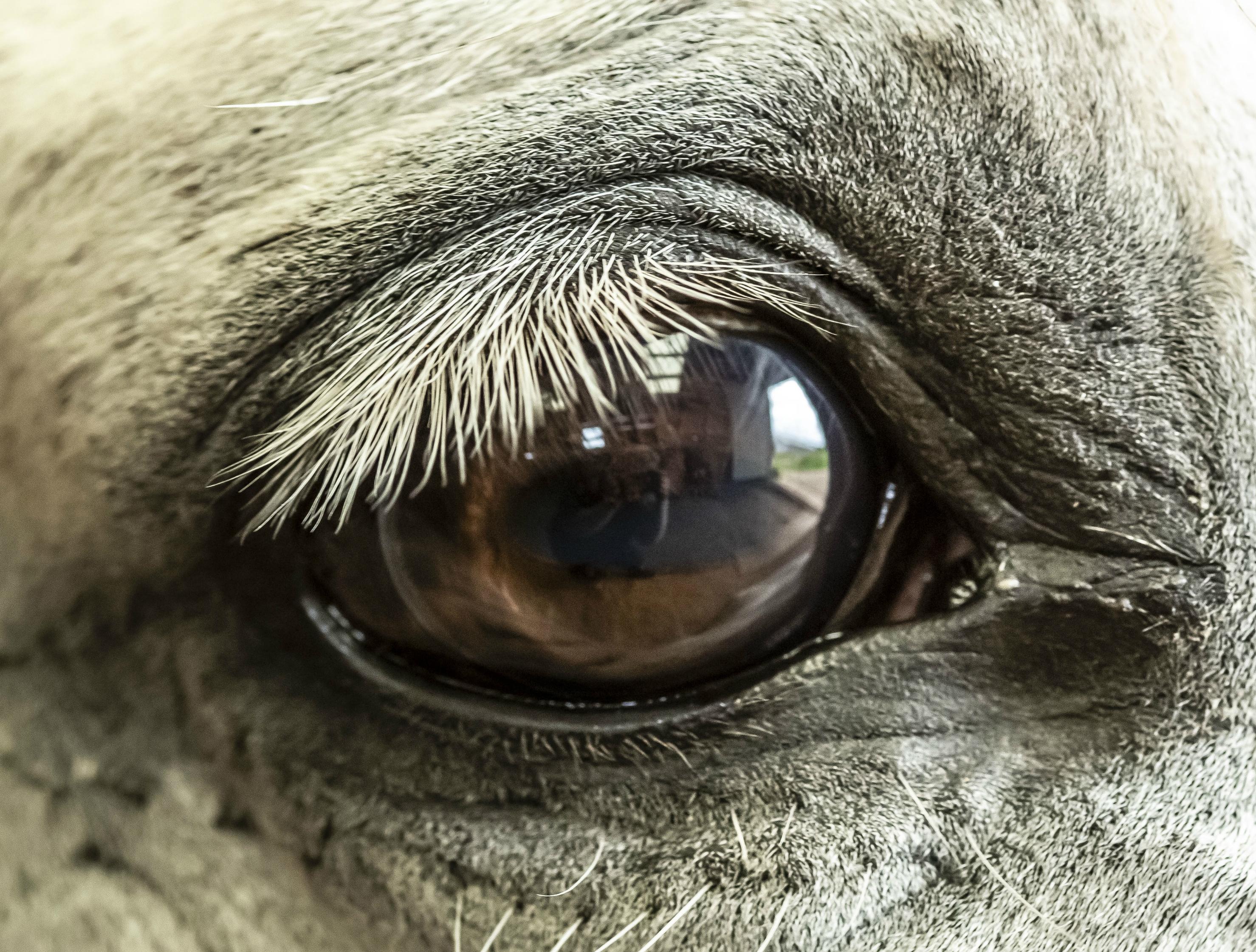 Milyen állat szeme látszik a képen?