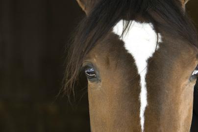 állatok szeme