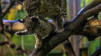 Szenzáció a Nyíregyházi Állatparkban