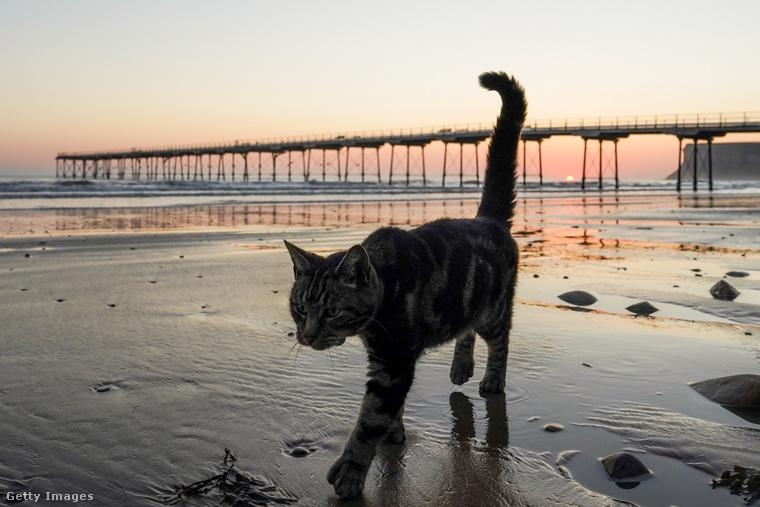Ez ugyanaz a macska, csak most elmegy innen.