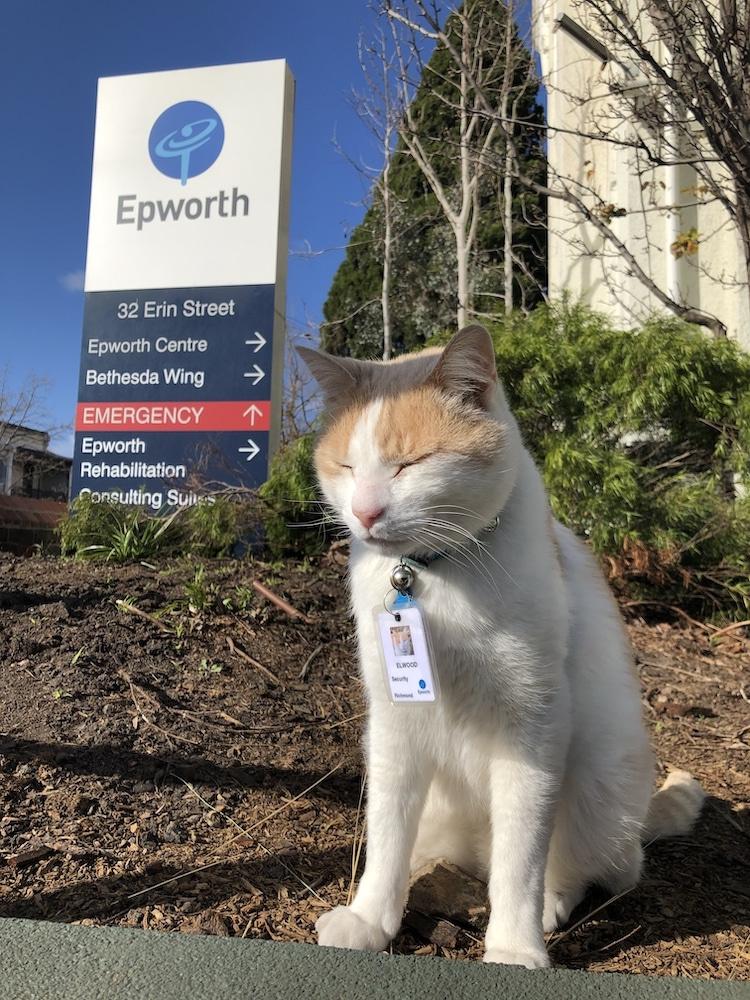 Amikor a patológus közelebbről megvizsgálta Elwood nyakörvét, észrevette, hogy még saját hívószámmal is rendelkezik a cica.