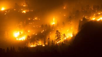 Rekordmennyiségű széndioxid került a levegőbe az északi erdőtüzek miatt