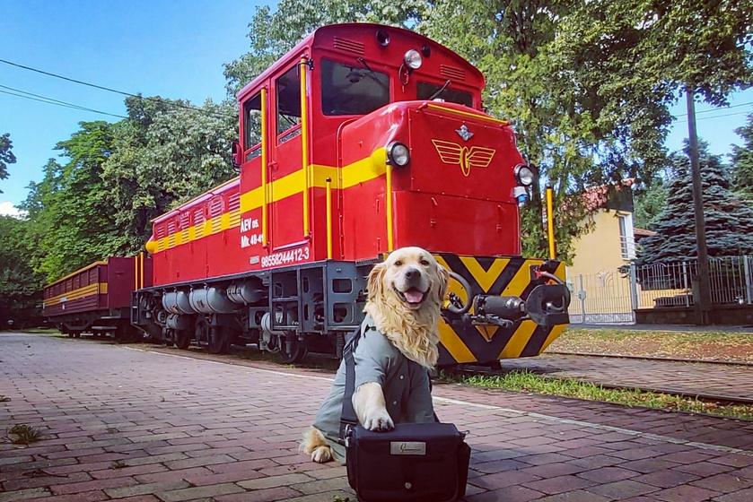 A Mátravasút cuki utaskísérőjét, Zsömit egyaránt imádják a gyerekek és felnőttek is, és ő is odavan érte, ha simogatják, és játszanak vele. Mindenkivel nagyon barátságos, és már teljesen otthon érzi magát a vonaton.