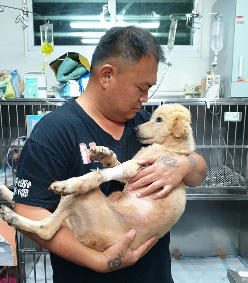 Mrs. Hsu's Sanctuary nevet viselő menhely ma már Tajvan egyik legnagyobbja, és szerencsére sok önkéntes akad, aki besegít a családnak. A képen a családfő, illetve egyik mentett kutyusuk látható.