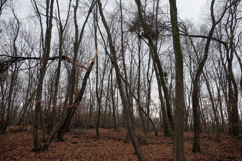 A Hója-erdő, románul Hoia Baciu nevét egy juhászról kapta, aki 200 bárányával együtt nyom nélkül eltűnt a fák között. Magyarul Bácsi-erdőnek is hívják.