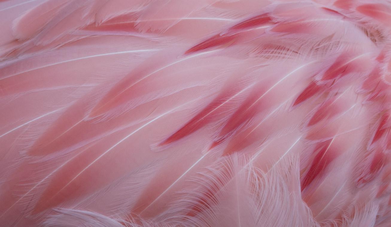 flamingó nyitóka