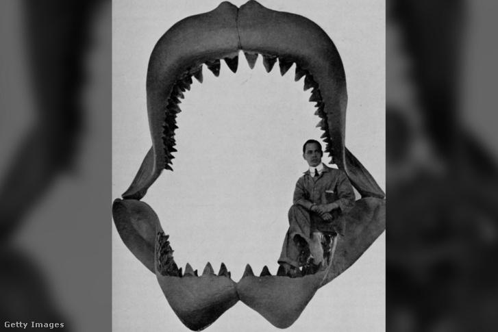 1901-es kép egy Carcharodon Megalodon állkapcsáról
