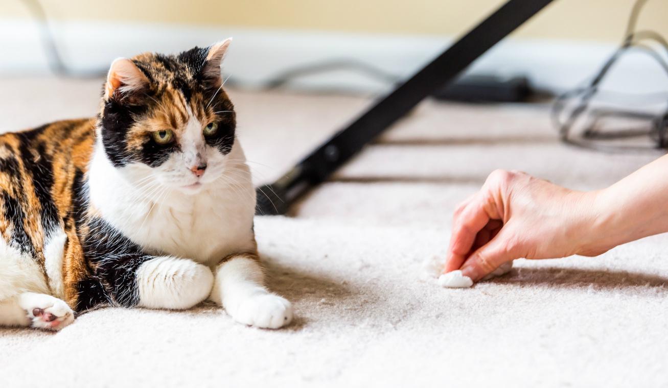 macska pisi szőnyeg