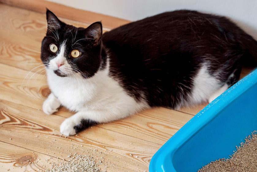 macska pisi szőnyeg 2