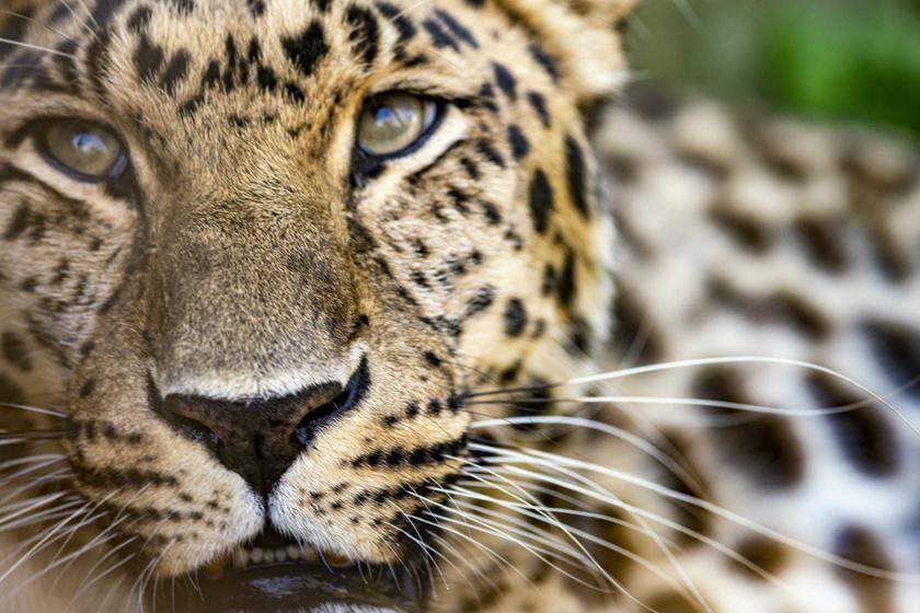 8 állat, ami 10 éven belül eltűnik a Földről: még visszafordítható lenne a sorsuk