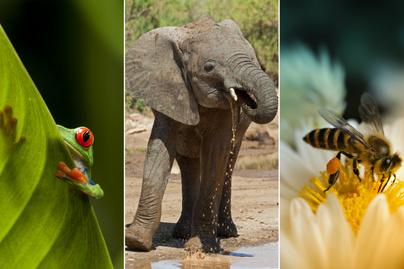 állatok szerepe