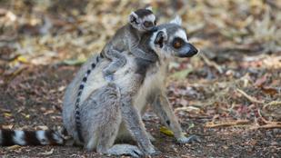 Több mint kétharmadával csökkent a vadon élő állatok száma