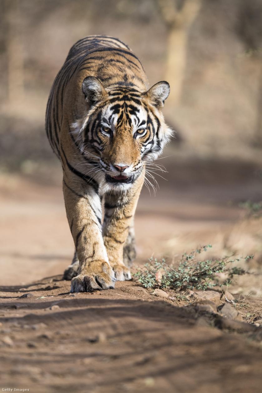 veszélyeztetett-állatok2