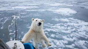 Tényleg nem érzékeli a jegesmedvéket az infrakamera? És ha igen, miért nem?