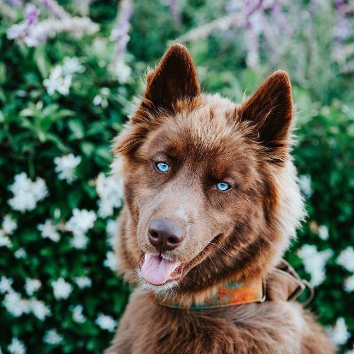 Az igézően kék szemű és különleges bundájú kutyust imádják az interneten, már több mint 15 ezren követik a mindennapjait.