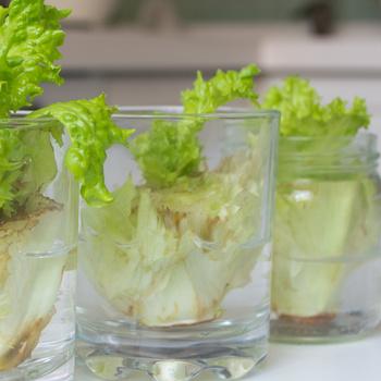 Zöldségtermesztés konyhai hulladékból? Az újrahasznosítás legjobb módja