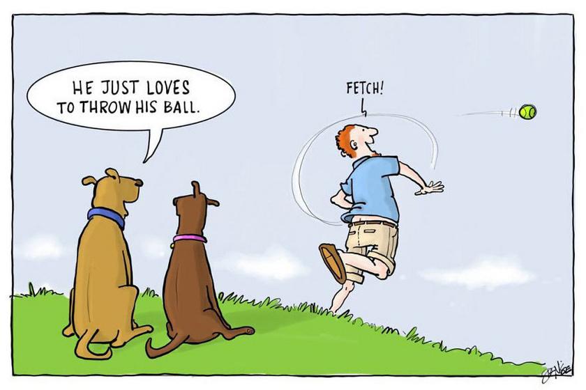 - A gazdi imádja eldobni a labdát.