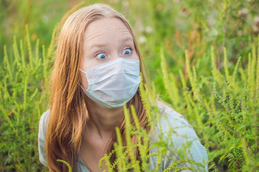 Megtévesztő tünet figyelmeztet a parlagfű-allergiára: sokan összekeverik a megfázással