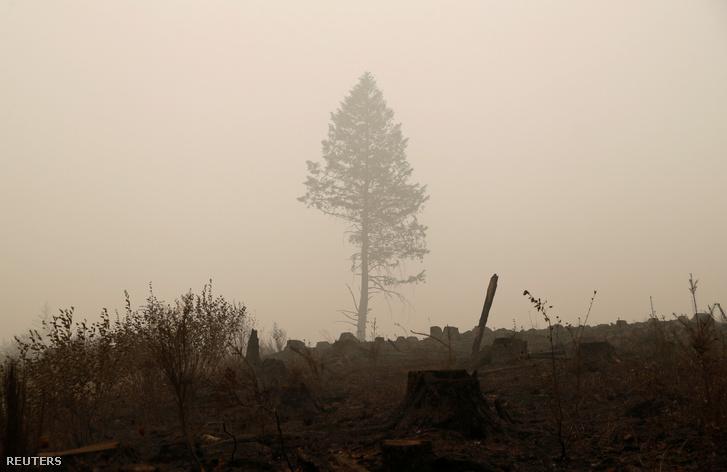 Fa áll a futótűz után Oregon államban 2020. szeptember 13-án