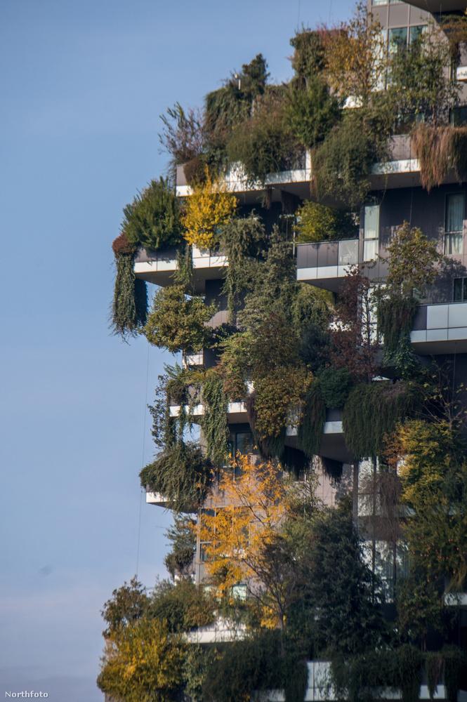 A 2014-ben elkészült házon összesen 30 ezer négyzetméternyi zöldfelület van, amit sokkal rendezettebb állapotban tartanak, mint Kínában, talán ezért is lehetséges, hogy Milánóban még nem lepték el a szúnyogok az épületet