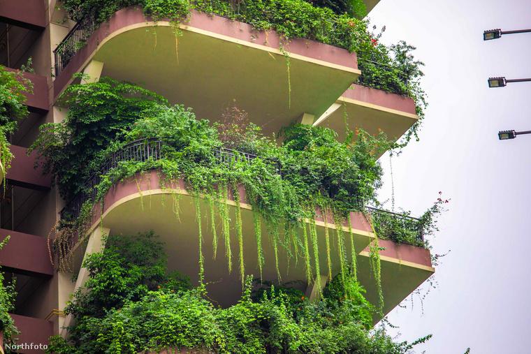 Körülbelül húszféle különböző növényt ültettek a luxusingatlanok erkélyeire, hogy megszűrjék a zajt és tisztítsák a levegőt, ám most úgy tűnik, teljesen benövik az épületet