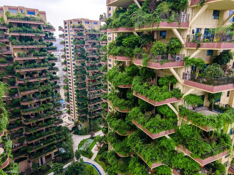 Hát a szúnyoginvázió miatt! Úgy látszik, nemcsak az emberek gondoltak ideális lakhelyként a zöld felhőkarcolókra, a rovarok is úgy döntöttek, beköltöznek