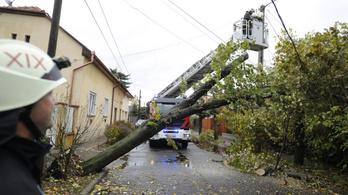 Ezért dőlhetnek ki a budapesti fák