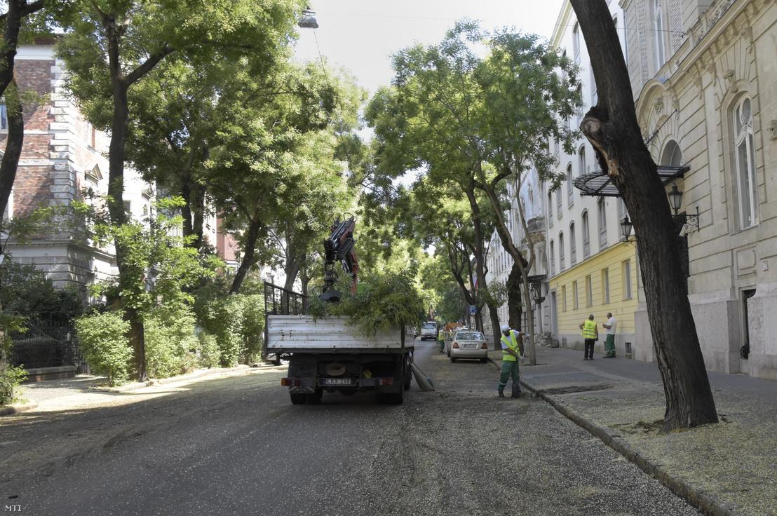 Fakivágás a Benczúr utcában