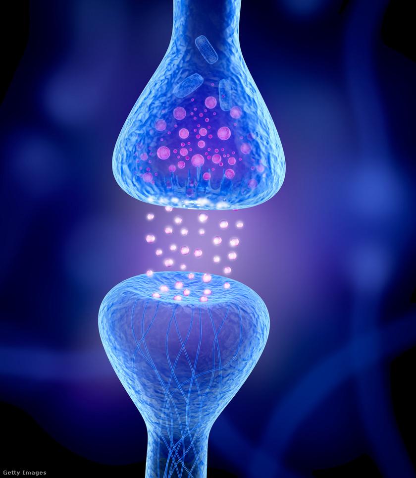 neuronok