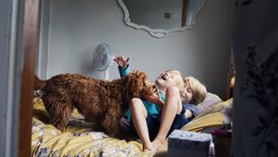 3 tipp a felelős kutyatartás világnapjára