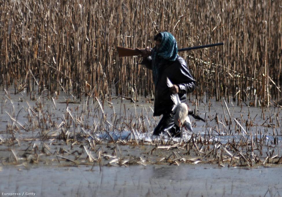 Indiai orvvadász és zsákmánya Kasmír egyik mocsaras részén. A költöző madarak nem ismernek határokat, így védelmük a világban nemzetközi feladat. Indiát egyre több ország bírálja a költöző madarak tizedeléséért: közel négyszázezer madár vándorol télen India felé, ahol az elmúlt években aggasztó méreteket öltött a túlnépesedett terület élelmiszerigényét kiszolgáló orvvadászat.