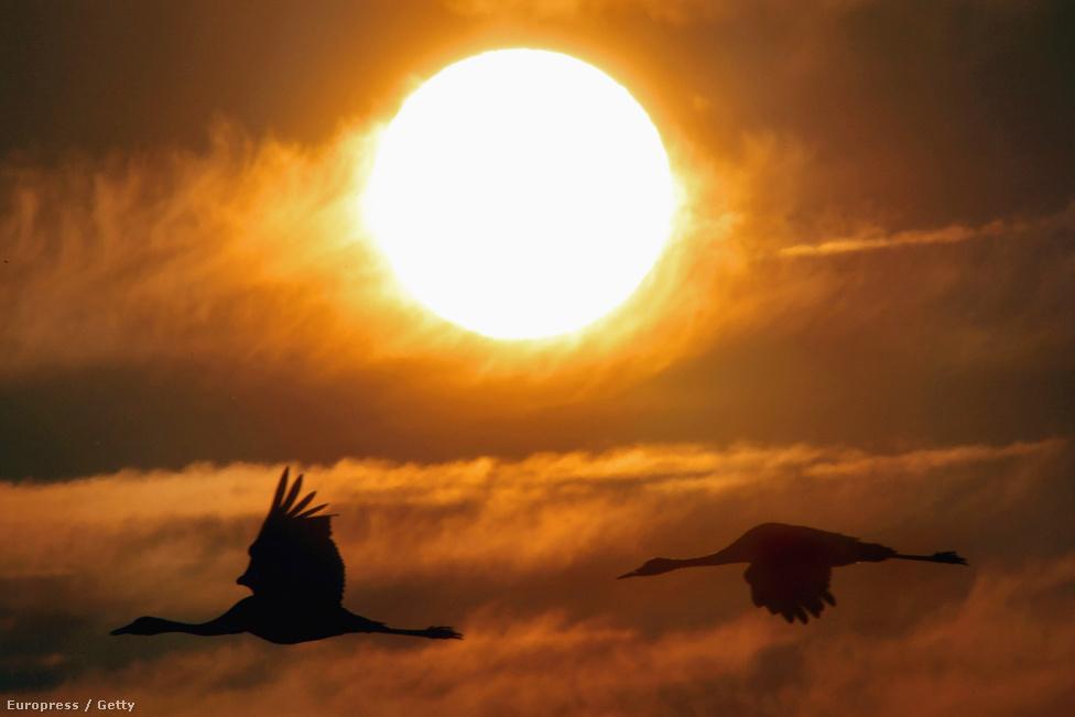 Költöző darvak a naplementében Izrael felett, ahol becslések szerint ötszázmillió madár kel át minden évben.