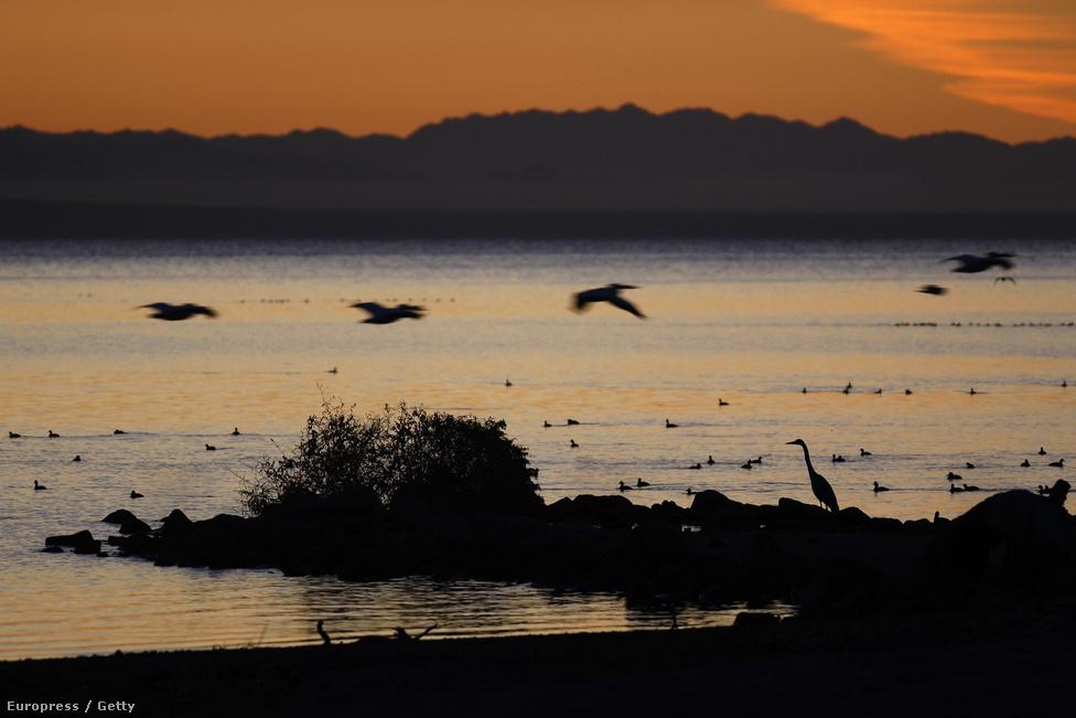 Pelikánok a kaliforniai Meccában. A Közép-Amerikán átutazó madarak egyik kedvelt pihenője veszélybe került a terület fejlesztési tervei miatt. A kiszáradó tó helyére negyvenezer embernek otthont adó lakótelep építési tervét fogadták el 2005-ben, de az építkezéssel kettévágnák az Észak- és Dél-Amerika között ingázó madarak fő vándorlási útvonalát. A madarak vándorláshoz való jogát nemzetközi egyezmények védik 1918-óta, így az építkezések még nem kezdődtek el.
