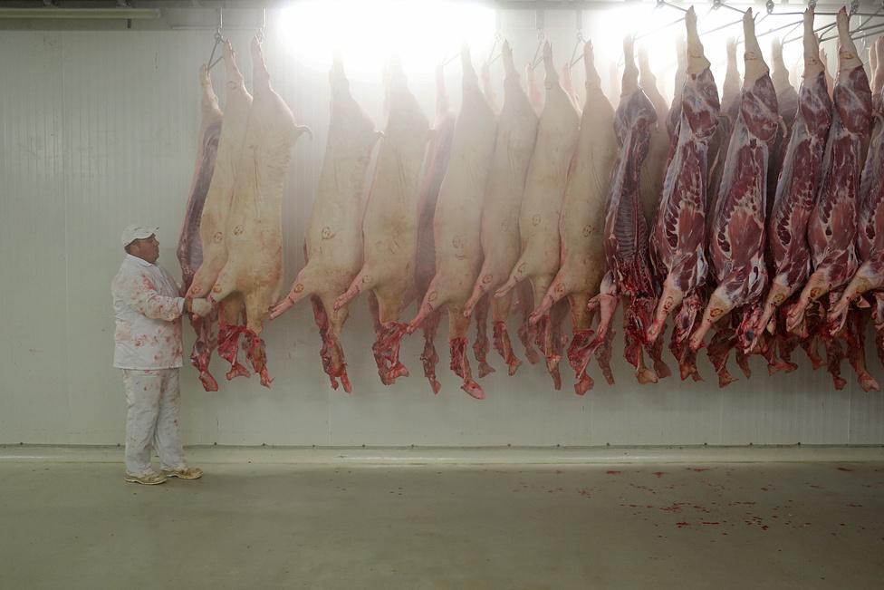 A húskombinátba kerülő sertéshús nagyon megdrágult: tavaly húsz, csak idén nyárig újabb harminc százalékkal kilónként 450 forintra nőtt az ára. Ez tovább szűkítette a gyulai húscég mozgásterét