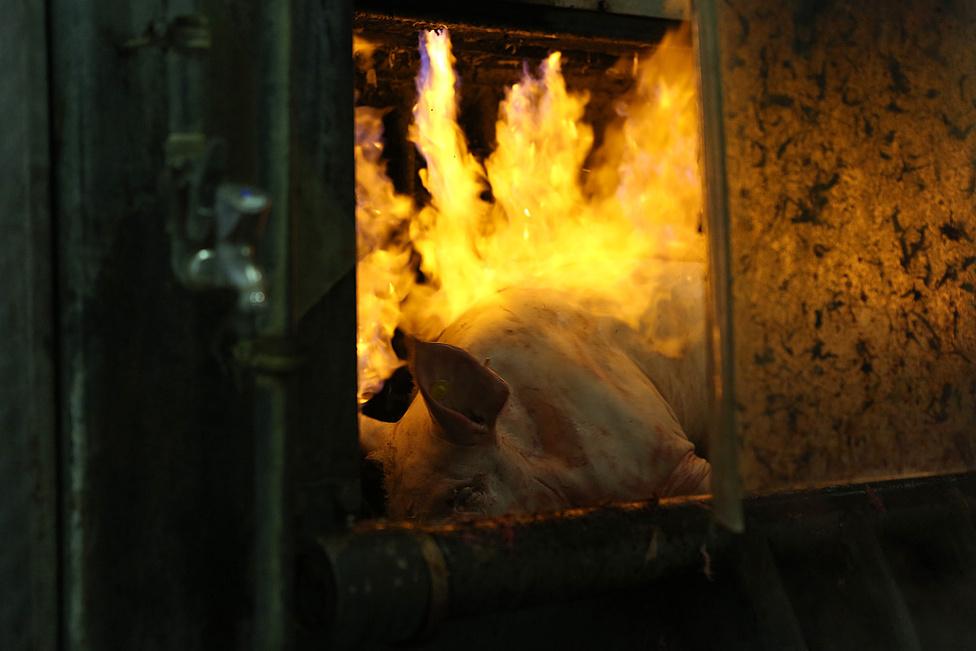 A gyulai kolbász csak Magyarországra jellemző alapanyagokból, és csak meghatározott sertés meghatározott részeiből készülhet