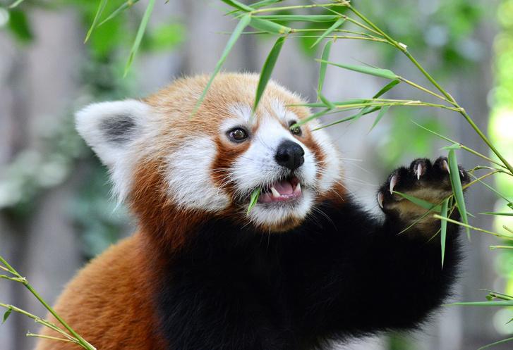 kis panda28 foto Bagosi Zoltan