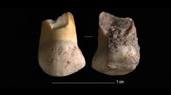 Velence régiójában egy 45-48 ezer éves neandervölgyi fogát találták meg