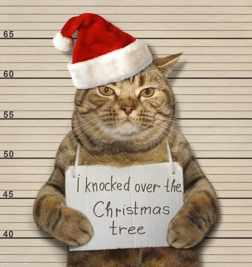 """""""Feldöntöttem a karácsonyfát."""""""