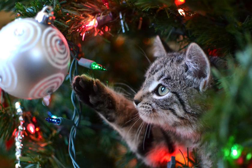 10 mém, ami bizonyítja, hogy a macskák igazi karácsonyi trollok - Nem izgatja őket az ünnepi hangulat