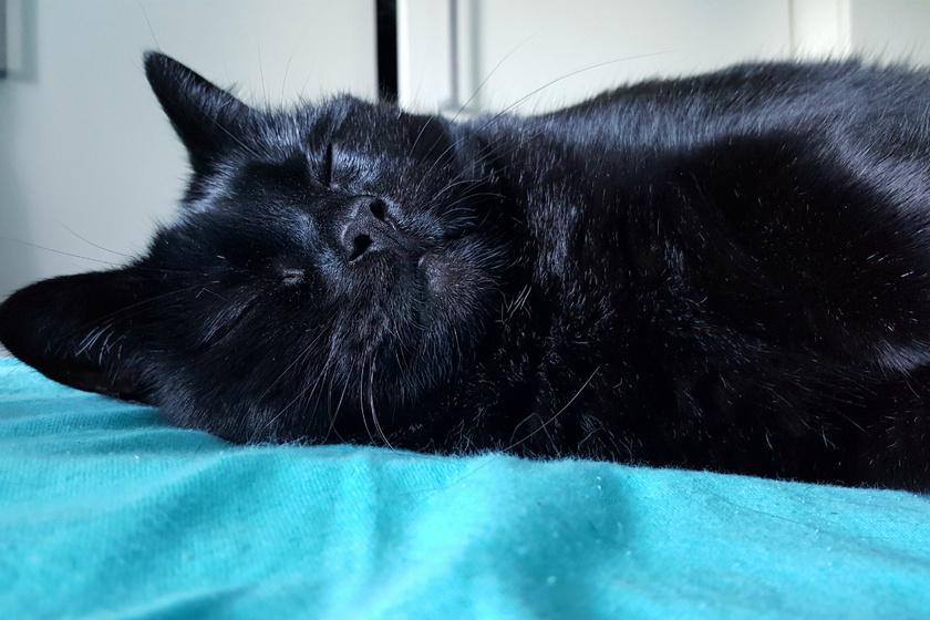 Az ébenfekete macskának világító szemei vannak: különleges az összhatás